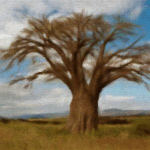 Huile Précieuse de Baobab du Sénégal