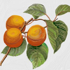 Sérum Fruité à l'Abricot pour Visage