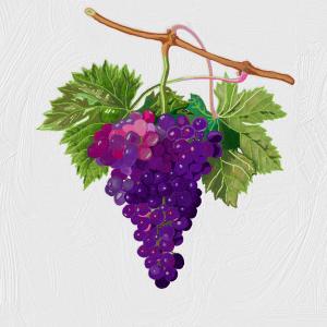 Sérum Hydratant aux Raisins pour Visage et Cheveux