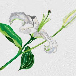 Huile Végétale de Lys contre les tâches pigmentaires
