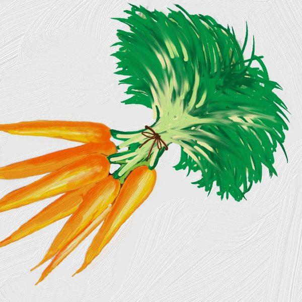 Huile de carotte BIO