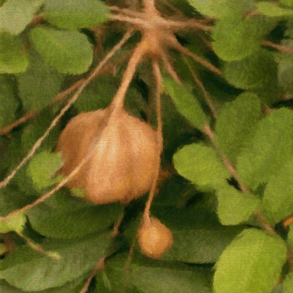 Huile végétale d'Andiroba BIO