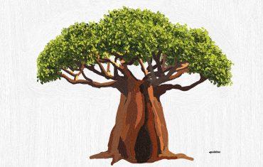 Huile végétale de Baobab BIO