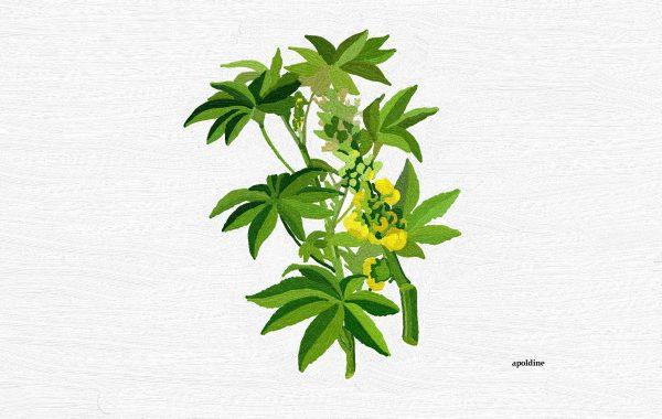Huile végétale de Ricin BIO
