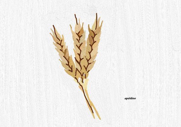 Huile végétale de blé